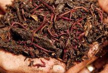 Solucan ve kompost