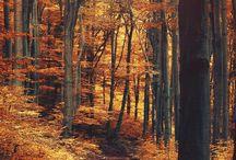Erdő - Forest