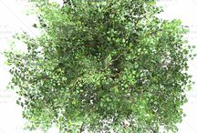 alberi_1_pianta