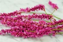 Yard & Garden: Cut Flowers