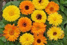 fleurs pleins soleil