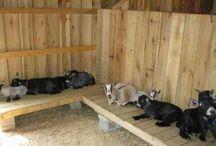 casa dos animais.