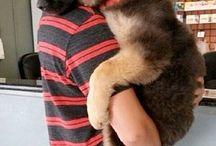 Fur Baby German shepherds