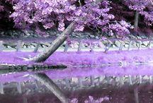 The Color Purple / by Sandy Sibert