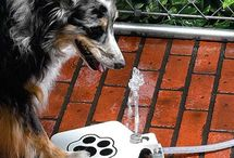 Pet Products, Projects, Safety and Ideas / Pet products,health tips, safety tips, training aids, infographics, posters, and projects.  Tools and products for the safety, comfort or just for fun for our animal (furry or non furry) companions.   Disclaimer:  Board is informative for a lot of products.  Board Editor does not endorse any particular product (however I may add a note on my opinion of the product!).  / by Catherine Morales