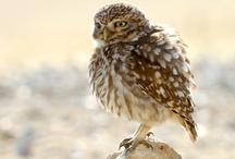 Birds and Bird Houses / I love Birdies / by Terry Walker