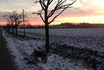 Go for a Walk with my dog  / Inne horst   Nottuln Germany