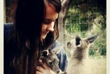 My Pet Kangaroos