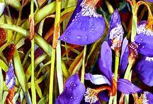 Art: Jeanne DeHaan, watercolors