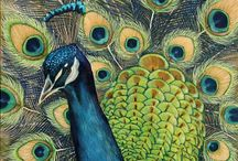 Peacocks / by Marybeth Theoret