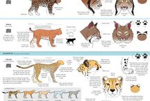 Cats -> Breed Charts
