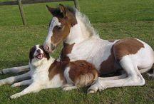 Unconditional Love!!!!