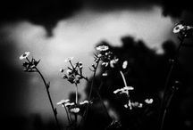 B/W Personal Work / Black and White photography