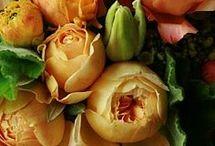 kwiaty pomarańcz