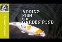 Fish garden ponds
