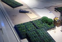 IndoorPlants