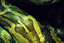 Uniquely colored animals  / Animals with unusual colors