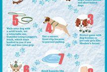 honden verzorging
