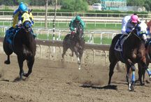 Live racing at Turf Paradise / Check here for the latest racing photos featuring the work of our official track photographer Coady Photography / by Turf Paradise Racetrack