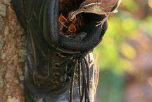 ptačí budka - bota