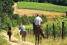 Cosa fare in Toscana - what to do in Tuscany / Bici, a cavallo, a piedi... tante le cose da fare in uno degli scenari più belli al mondo!