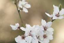 Spring  / by Katie Katie