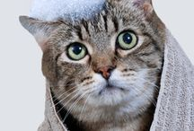 Cat Grooming & General Care / If it's about general cat care or cat grooming, this is where you'll find it. We also have separate boards for litter & litterbox, cat health, cat nutrition/food and cat behavior so make sure you follow us!