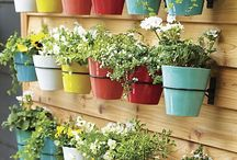 Potted Plants and Creative Ideas
