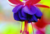 Flower power / Mekar