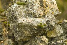 Luberon sauvage / Paysages du Luberon
