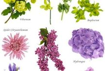 Flowers and availability / This board contain images that will help you find the rigth flowers at the right time of year