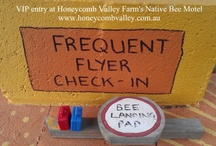 For the Bees / Making native bees and honey bees feel at home in your garden