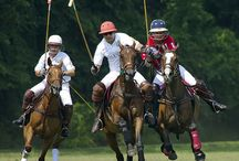 Polo / Majestic Sport