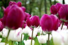 Flower Power / The beauty of flowers!