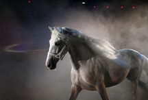 Wild Horses / Horses are central to the story of Lady Godiva in my novel Naked. Lady Godiva is the rider with her beloved horse Ebur! www.elizaredgold.com