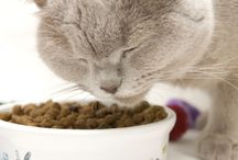 Cat Information / My cat's health