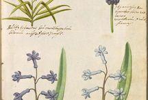 Hortulus botanical