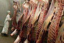 vleesfabriek / vlees