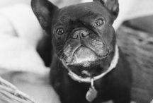 cão e gato:                               manhas e artimanhas