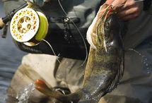 La #Pêche en #Lozère