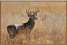 animals  / by Treama Reed Couron