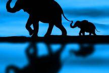 Elefantet