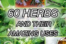 Herbs and Spices for Health & Cooking