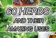 Garden- Herbs