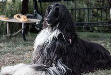 my dogs / мои собаки и все остальные