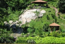 The Abode of Assam / It is one of the richest biodiversity zones in the world