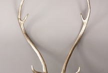 Antlers / Design incorporating antler both real and faux