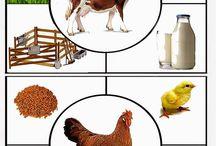 Domace zvieratká