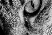 Sevimli , şirin , sinirli kediler