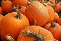 autumn, pumpkins and ...